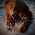 熊に追いかけられた